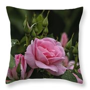 Rose Pictures 328 Throw Pillow