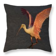 Roseate Spoonbill Photograph Throw Pillow