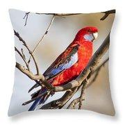 Crimson Rosella 1 - Australia Throw Pillow
