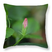 Rosemallow Bud Throw Pillow