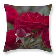 Roses And Roses Throw Pillow