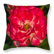 Rosey Rose Throw Pillow