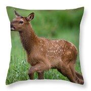 Rosie Elk Youngin Throw Pillow
