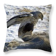 Rough-legged Hawk On A Mule Deer Kill Throw Pillow