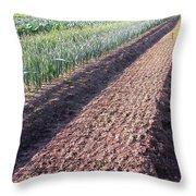 Row Row Row Throw Pillow