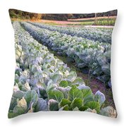 Row Two Throw Pillow