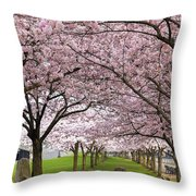 Rows Of Cherry Blossom Trees In Bloom Throw Pillow
