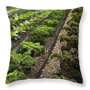 Rows Of Kale Throw Pillow