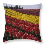 Rows Of Multicolored Tulips In Field Mount Vernon Washington Sta Throw Pillow