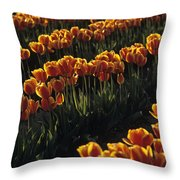 Rows Of Orange Tulips In Field Mount Vernon Washington State Usa Throw Pillow