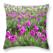 Rows Of Pink And Purple Tulip Flowers Throw Pillow