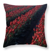 Rows Of Red Tulips Throw Pillow