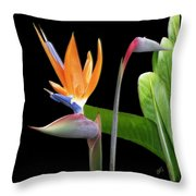 Royal Beauty II - Bird Of Paradise Throw Pillow by Ben and Raisa Gertsberg