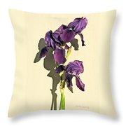 Royal Purple Iris Still Life Throw Pillow