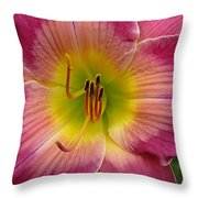 Royal Heritage Daylily Face Throw Pillow