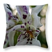 Royal Orchid  Throw Pillow