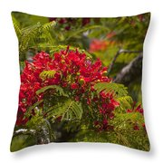 Royal Poinciana Throw Pillow