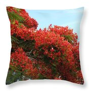 Royal Poinciana Branch Throw Pillow