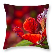 Royal Poinciana - Flamboyant - Delonix Regia Throw Pillow
