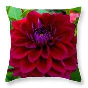 Royal Purple Throw Pillow