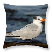 Royal Tern Throw Pillow