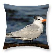 Royal Tern Throw Pillow