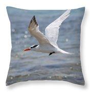 Royal Tern Flight Throw Pillow