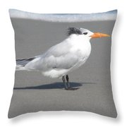 Royal Tern Seafoam Throw Pillow