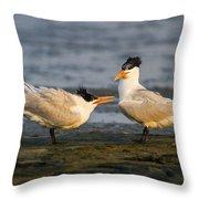 Royal Terns Throw Pillow