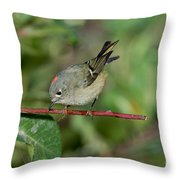 Ruby-crowned Kinglet Showing Crown Throw Pillow