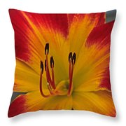 Ruby Spider  II Throw Pillow