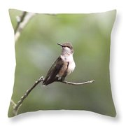 Ruby-throated Hummingbird 9332-1 Throw Pillow