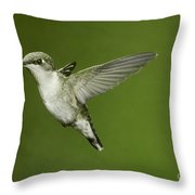 Ruby-throated Hummingbird At Flower Throw Pillow