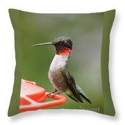 Ruby-throated Hummingbird Male 11702-1 Throw Pillow