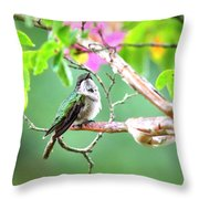 Ruby-throated Hummingbnird - 6763-002 Throw Pillow