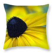 Rudbeckia Coneflower Throw Pillow