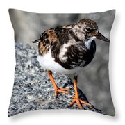 Ruddy Makes For The Rocks Throw Pillow