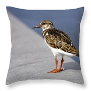 Ruddy Turnstone Bird Arenaria Interpres Florida Usa Throw Pillow