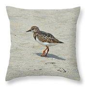 Ruddy Turnstone Wading Bird - Arenaria Interpres Throw Pillow