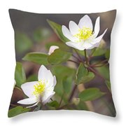 Rue Anemone Wildflower - Pale Pink - Thalictrum Thalictroides Throw Pillow