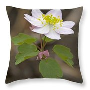 Rue Anemone Wildflower - Pink - Thalictrum Thalictroides Throw Pillow