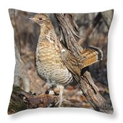 Ruffed Grouse On Mossy Log Throw Pillow
