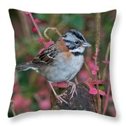 Rufous-collared Sparrow Throw Pillow