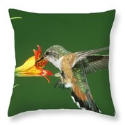 Rufous Hummingbird At Tiger Lily Throw Pillow