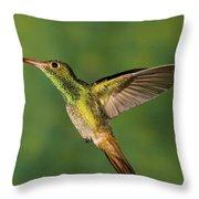 Rufous Hummingbird Feeding Throw Pillow