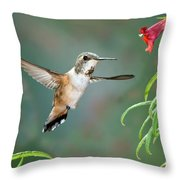 Rufous Hummingbird Female At Monkey Throw Pillow