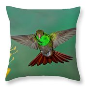 Rufous-tailed Hummer Throw Pillow