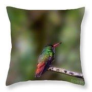 Rufous-tailed Hummingbird Throw Pillow