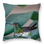 Rufous-tailed Hummingbird On Nest Throw Pillow