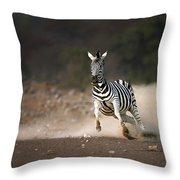 Running Zebra Throw Pillow by Johan Swanepoel